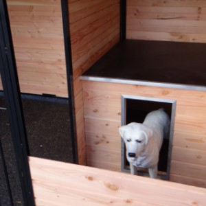 Built-in sleeping compartment Dog Kennel