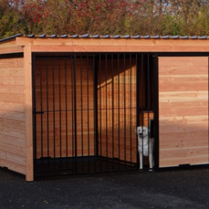 Dogkennel FORZ black with frame of Douglaswood