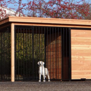Decent dog kennel for outside