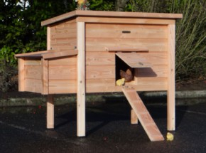 Beautiful chicken coop with laying nest