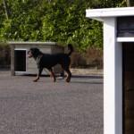 Nice doghouses JoyPet.eu