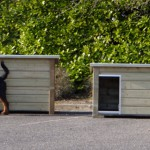 Doghouse with flat roof