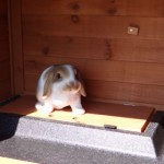 Lockable first floor rabbit hutch