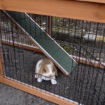Doors rabbit hutch Maurice
