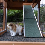Rampe rabbit hutch Maurice