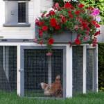chickencoop sunshine