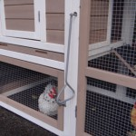 Chicken coop with ramp