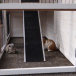 Run rabbit hutch Holiday