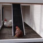 Chicken run with rampe