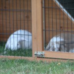 Rabbit house with feet