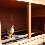 Wooden chicken coop with perches